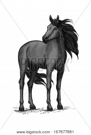 Black horse vector sketch. Wild mustang stallion standing with turned head. Farm or ranch equine animal symbol for equestrian racing sport, horse riding races club, bets or exhibition