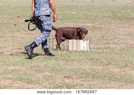 Soldiers from the K-9 dog unit works with his partner to during a demonstration Training. Identification is suspect.