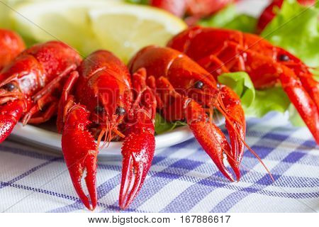 Boiled red crayfish on the plate food concept