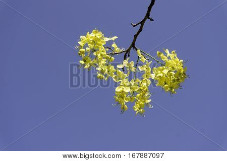 Flowers with sky Yellow trimmed with beautiful blue sky