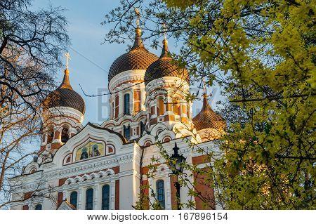 Alexander Nevsky Cathedral view through springtime flowers Tallinn Estonia
