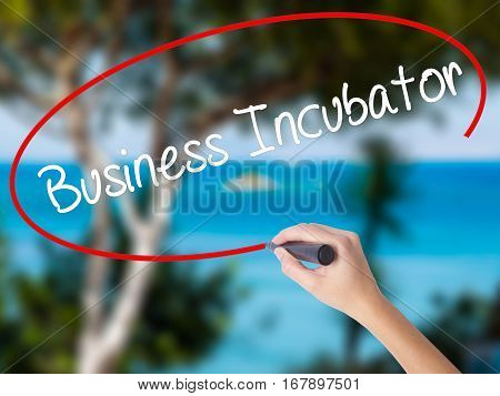 Woman Hand Writing Business Incubator With Black Marker On Visual Screen