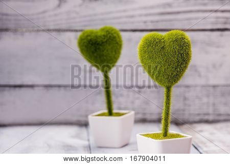 Valentine's day and Sweetest day love concept. Green grass heart shaped topiary. Holiday background with copy space.