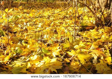autum forest with side creek and fallen leaves and log