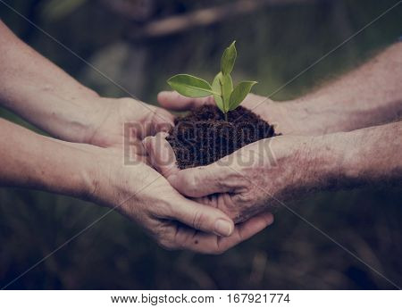 Environmental Ecology Plant Nature Conservation