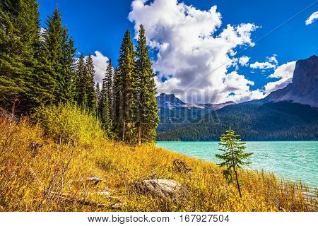 The smooth turquoise water among the yellowed autumn forest. The concept of eco-tourism and active recreation. Lake in the Rocky Mountains