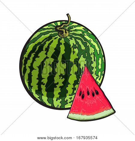 Whole striped watermelon with curled up tail and triangular piece with seeds, sketch style vector illustration isolated on white background. Realistic hand drawing of whole ripe watermelon and slice