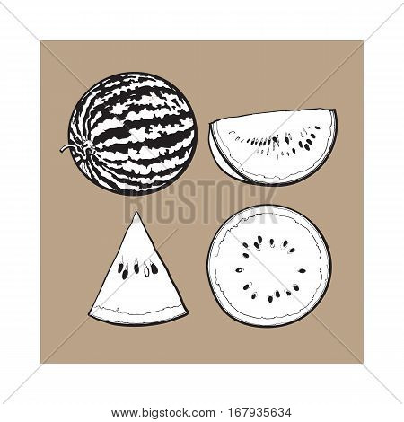 black and white Whole, half, quarter and slice of ripe watermelon, sketch style vector illustration isolated. Realistic hand drawing of whole, half, quarter and piece of watermelon