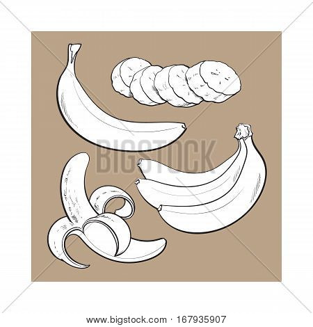 black and white Sliced, peeled, singl and bunch of three ripe banana, sketch style vector illustration isolated. Realistic hand drawing of whole, peeled, sliced banana and a bunch of three bananas
