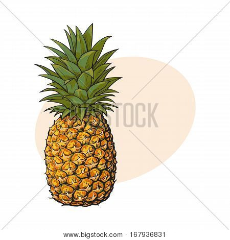 Whole, unpeeled, uncut pineapple, sketch style vector illustration with place for text. Realistic hand drawing of whole fresh, ripe pineapple, side view