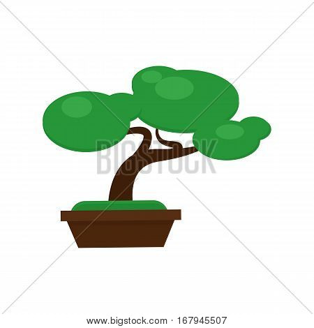 Bonsai pine tree vector illustration. Miniature japanese dwarf natural grow pottery design. chinese, green trunk asia branch. Traditional gardening growth.