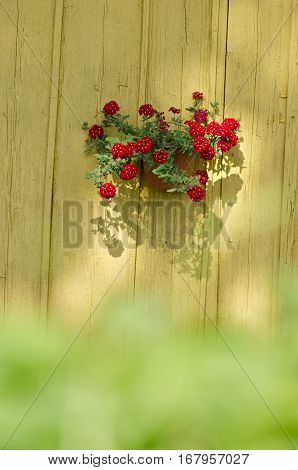 flowerpot with red flowers on old wooden barn wall
