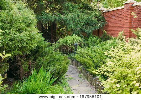 Beautiful landscape design, evergreen trees and shrubs in sunlight. Modern landscaping: Fir trees, blue spruces, arborvitae, thuja, shrubs abd bushes. Summer garden