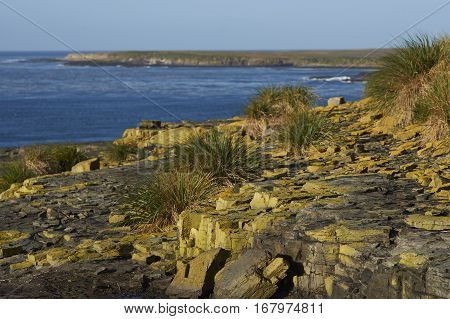 Lichen covered rocks along the cliffs of Bleaker Island in the Falkland Islands.