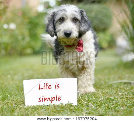 The cute black and white adopted dog and paper with text life is simple