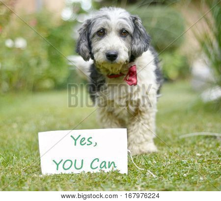 The cute black and white adopted dog and paper with text yes you can