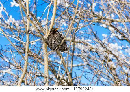 Songbird Sitting On A Tree.
