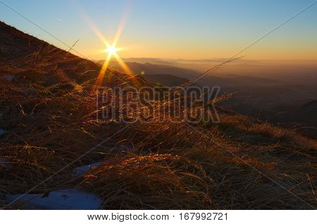 Sunrise on the Italian Alps during the winter with some dry plants blowing in the wind in the foreground