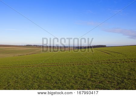 Yorkshire Wolds Wheat