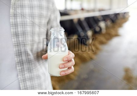agriculture industry, farming, people and animal husbandry concept - close up of young man or farmer with cows milk in bottle at cowshed on dairy farm