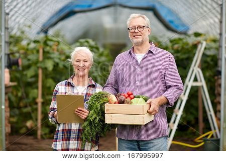 farming, gardening, agriculture, harvesting and people concept - senior couple with box of vegetables and clipboard at farm greenhouse