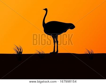 Vector illustration of black silhouette ostrich on the background of sunset. Side view, profile.