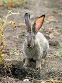 Rabbit on ground background. poster