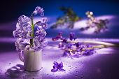 Still life with hyacinth flower in gentle violet colors and magic bokeh poster