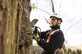 Lumberjack with chainsaw and harness pruning a tree. Arborist cuting tree branches. poster