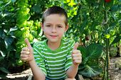 8 years old boy with his vegetables  in vegetable garden - kids poster