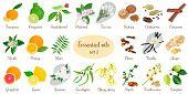 Big vector set of essential oil plants. Ylang-ylang, eucalyptus, jasmine, tea tree, bergamot, sandalwood, patchouli etc. For cosmetics, store, spa, health care, aromatherapy, homeopathy, Ayurveda poster