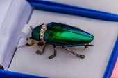 Brooch jewelry from metallic wood boring beetle poster