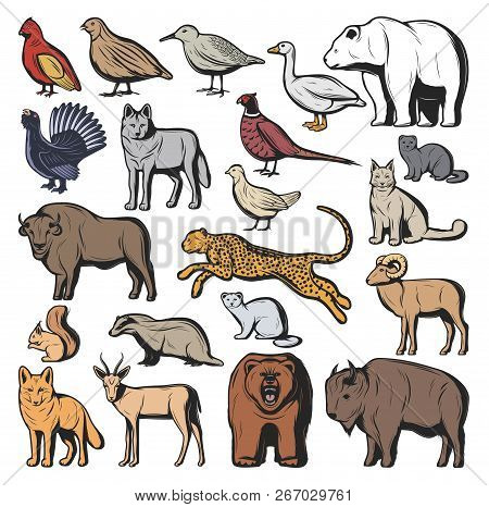 Forest And Savannah Animal Vector Characters, Hunting Sport. Bear And Wolf, Lynx And Jaguar, Squirre
