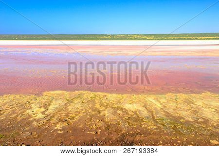 Pink Lake In Port Gregory Road At Gregory In Western Australia. The Hutt Lagoon Is A Pink Color For