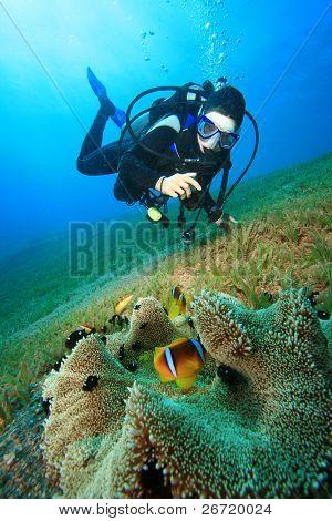 Scuba Diver photographs Anemonefish