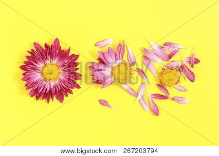 From Daisy With All Its Petals To Daisy With No Petals On Yellow