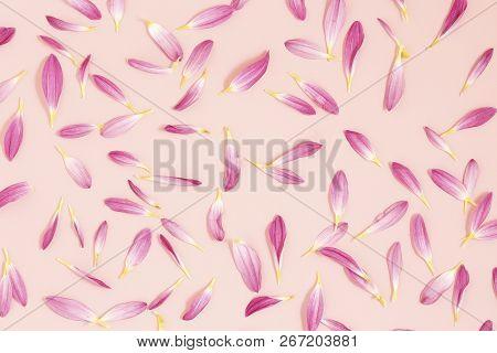 Flower Petals On Pink Paper, Romantic Background