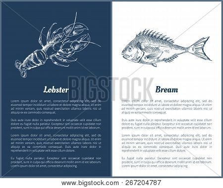 Lobster And Bream Fish Posters With Monochrome Outline Sketches. Seafood Unprepared Ingredients Of D