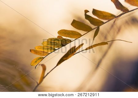 Autumn Leaves Vintage Background. Autumn Background Nature. Fall Background Vintage Photo. Yellow Le