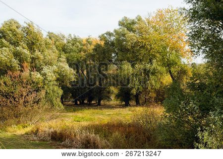 Autumn In Forest Nature. Green Forest Nature. Nature. Trees. Natural Environment. Forest Nature. Aut