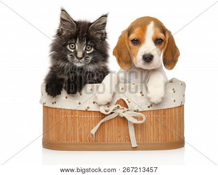 Kitten And Puppy Together In Basket On A White Background. Baby Animal Theme