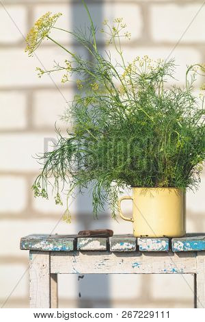 Bunch Of Dill In Old Yellow Cup On Vintage Wooden Table. Outdoor, Sunny Autumn Day. Shallow Depth Of