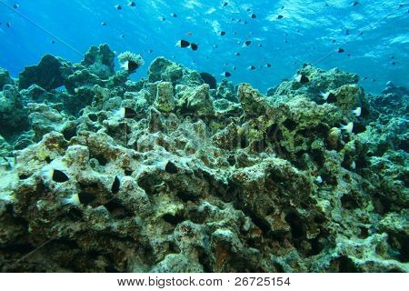 Environmental problem: dead coral reef killed by global warming and pollution