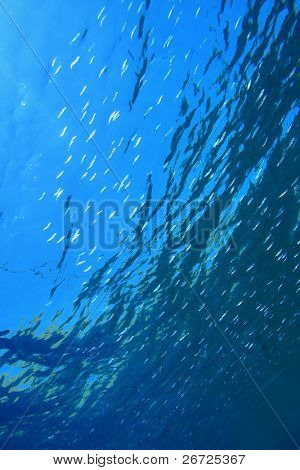 Nature background with fish fry