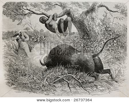 Old illustration of  famous explorer Captain John Hanning Speke shooting a buffalo. Created by Bayard, published on Le Tour du Monde, Paris, 1864