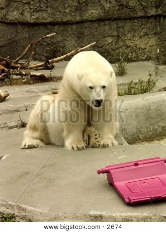 Polar Bear And Pink Toy