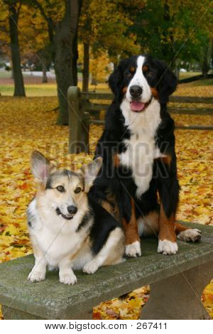 Two Dogs On Bench
