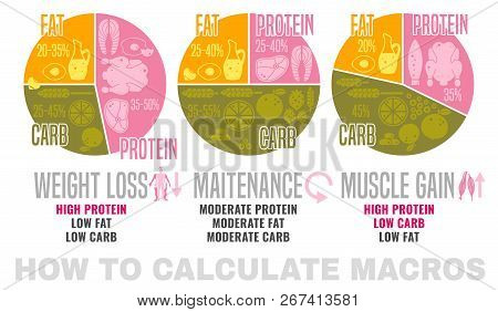 Crafting Your Macronutrient Ratio. Fat Loss, Bodybuilding And Health Maintenance Diets Diagrams. Col