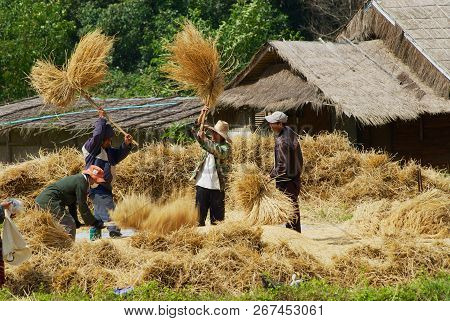 Doi Inthanon, Thailand - November 14, 2008: Unidentified People Of The Karen Hill Tribe Hits Rice Pa