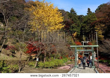 Kamakura, Japan - December 3, 2016: Tourists Visit Kencho-ji Temple Gardens In Kamakura, Japan. In 2